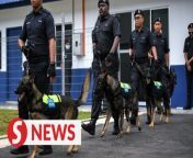 The newly established Royal Malaysia Police (PDRM) K-9 unit in Langkawi, Kedah will further strengthen the police force in preventing and controlling crime at this popular tourist destination.<br/><br/>Inspector-General of Police Tan Sri Abdul Hamid Bador is confident that several cases could be solved immediately and the police would succeed in fighting crimes with the services of the five detective dogs.<br/><br/>WATCH MORE: https://thestartv.com/c/news<br/>SUBSCRIBE: https://cutt.ly/TheStar<br/>LIKE: https://fb.com/TheStarOnline